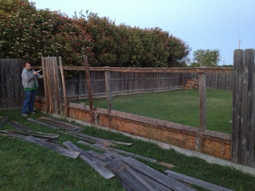 Beginning to tear the old fence down