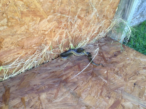 Found a snake in the fence!